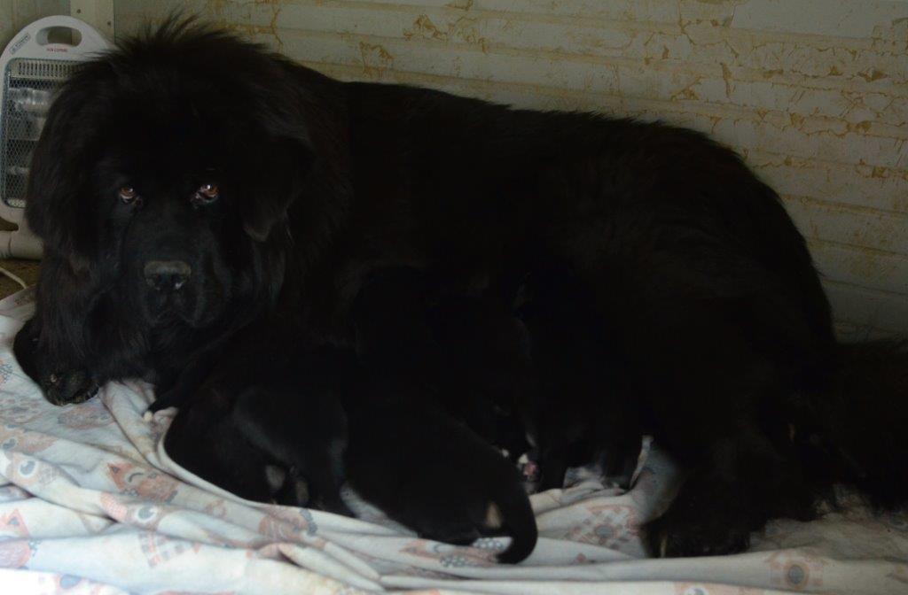 Nati i cuccioli di Heimudan